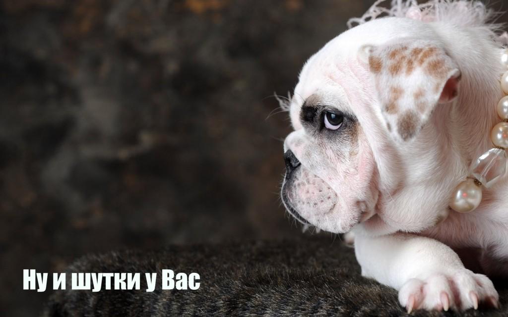 govoryaschaya-sobaka