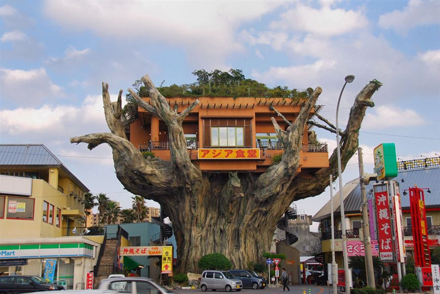 Думаю, в конце нашего рейтинга вы сами убедитесь, что баром на дереве в наше время никого не удивишь: уж больно много их развелось. Но пропустить это японское заведение нельзя - уж больно круто выглядит дерево, на котором разместился бар.