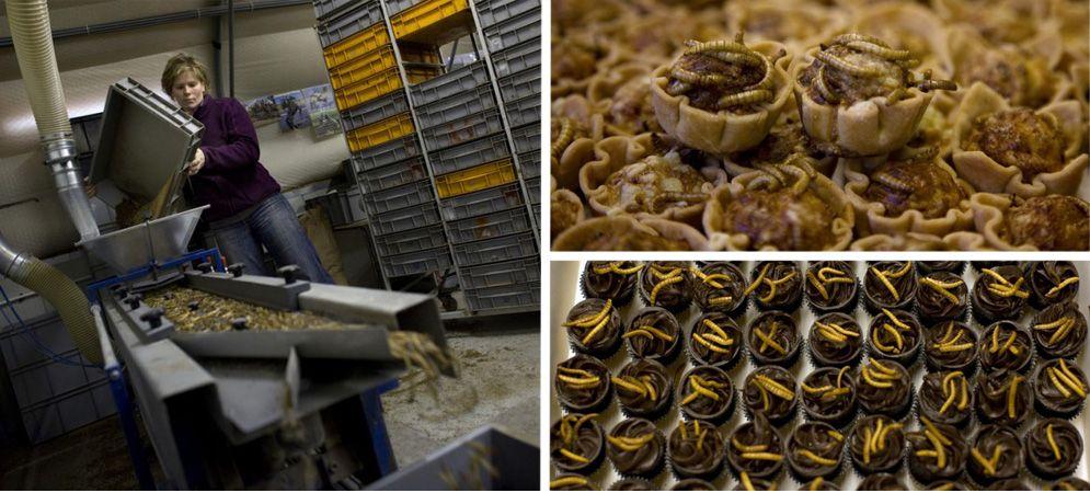 десерт корзинки конфеты мучные черви