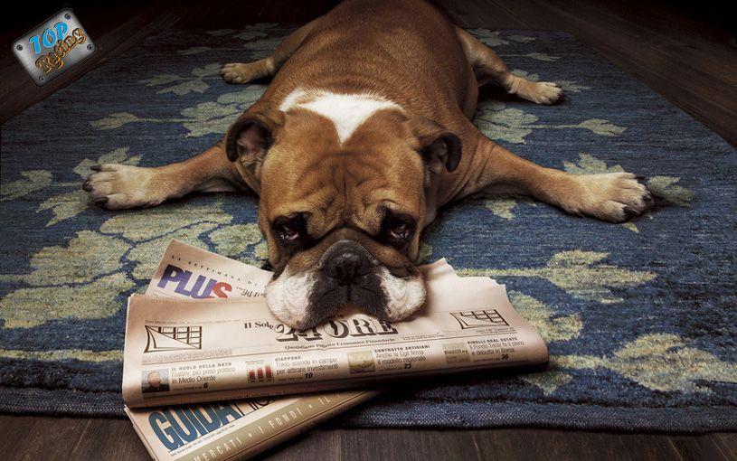 ленивая собака
