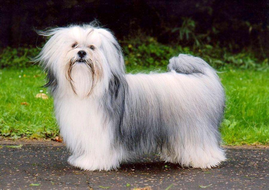 самые знакомые породы собак