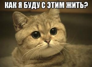 как я буду с этим жить - кот