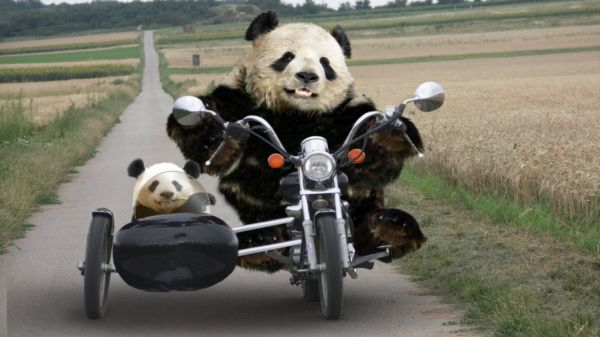 panda_na_motocikle_20121216_1769059671