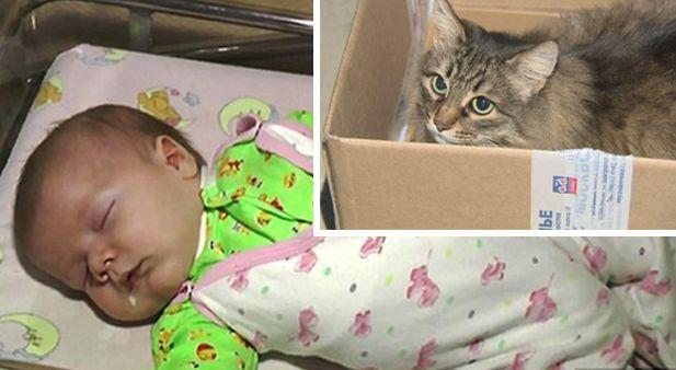 кошка маша спасла малыша