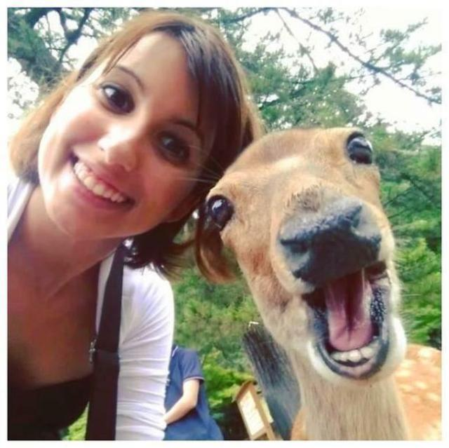 animals_selfie_05