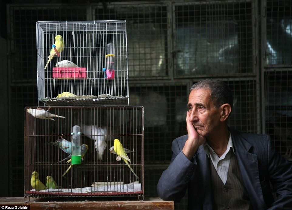 мужчина с попугаями