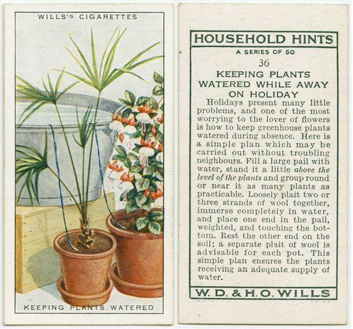 Как автоматизировать полив растений