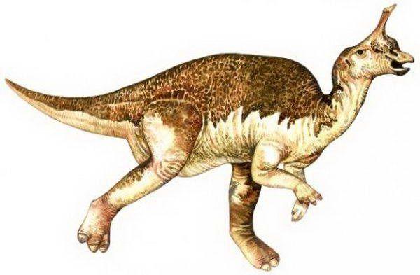 цинтаозавр
