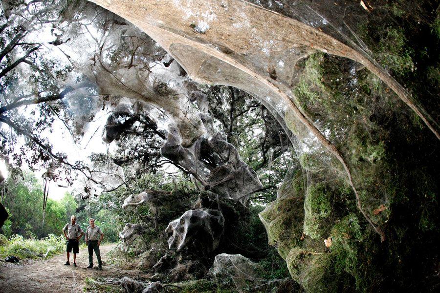 пакистан паутина на деревьях