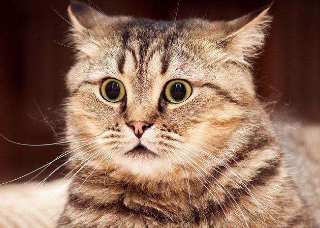 frightened cat