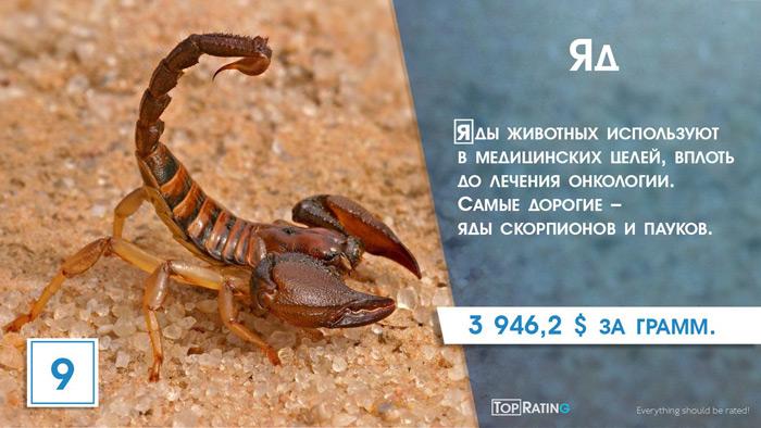 яд скорпиона
