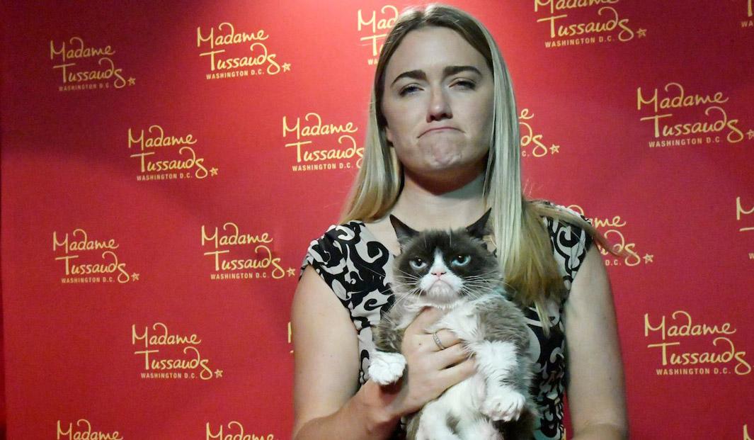 grumpy cat отсудил 700 тысяч
